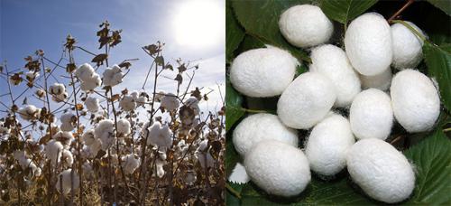 vao cotton